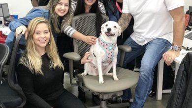 Wappa traz adestradores de animais a escritório em dia que reúne colaboradores e seus pets