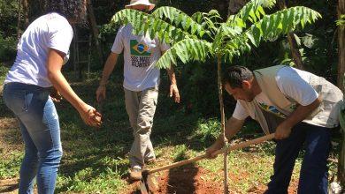 Photo of Coca-Cola FEMSA Brasil convida população para participar de plantio de árvores